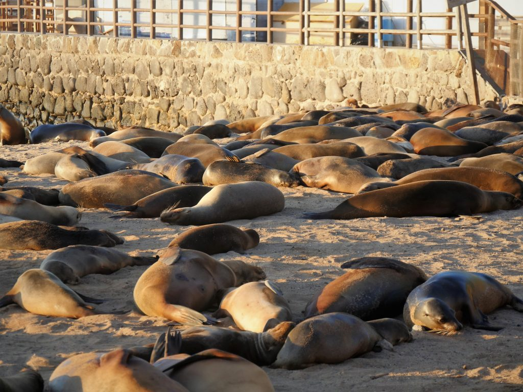 Seals at the beach